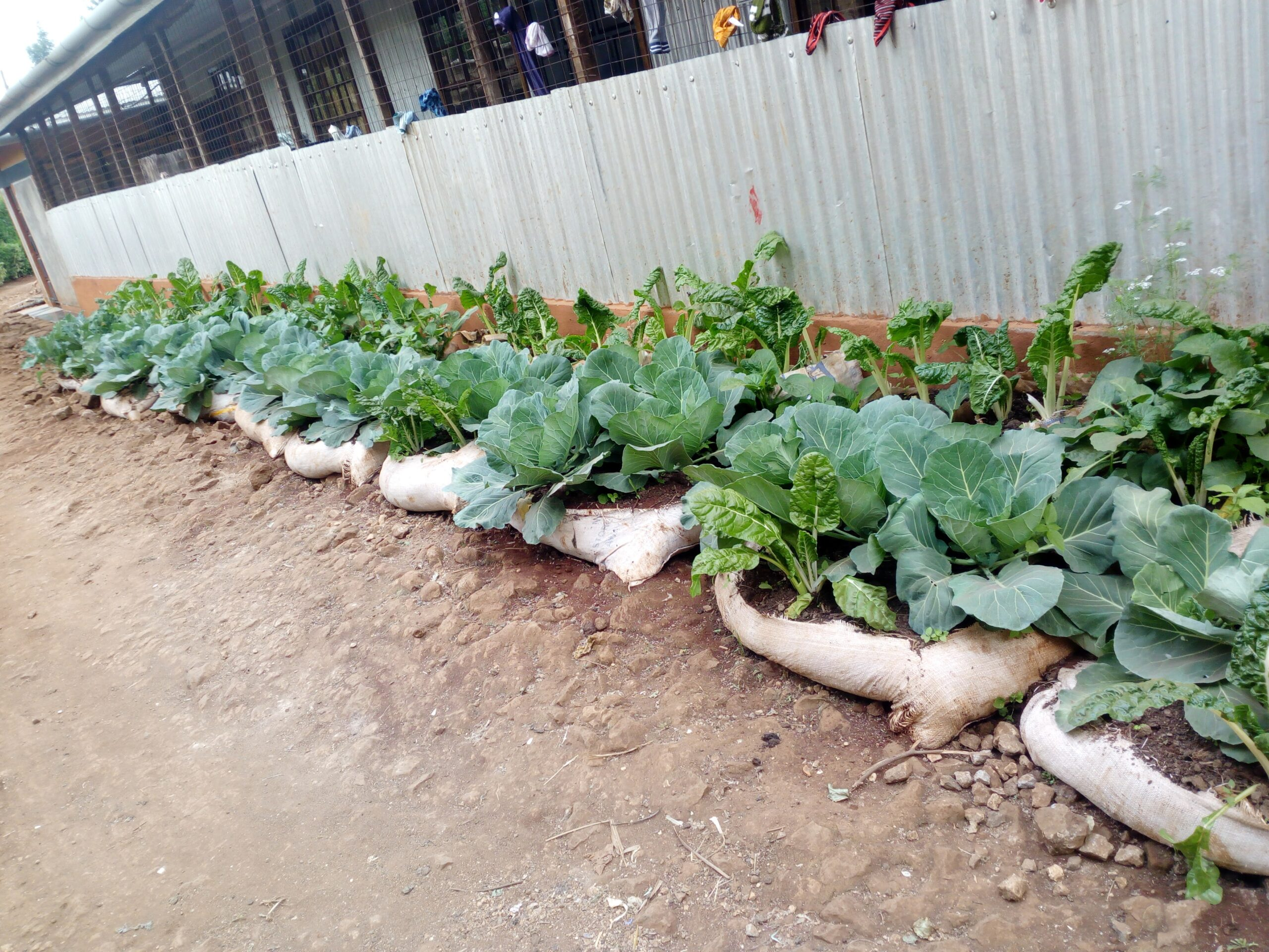 KITCHEN GARDENING BECOMES A SOURCE OF LIVELIHOOD FOR ORPHANAGES IN KENYA